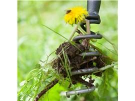 Symbolfoto - Löwenzahnzieher mit T-Stiel kaufen - Im Onlineshop für Garten