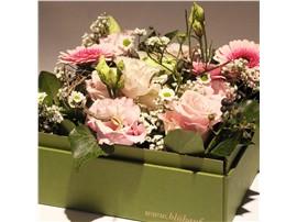 """Symbolfoto - Blumenbox Prag """"Blütentanz kaufen - Im Onlineshop für Garten"""