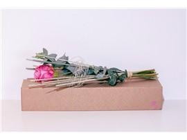 """Blumenbox Amsterdam """"Rose Maritim"""" kaufen - Im Onlineshop für Garten"""