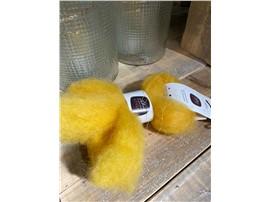 Lunte gelb zum Dekorieren, 100 % Schafwolle im Gartencenter Graz - Gartenplanung Steiermark