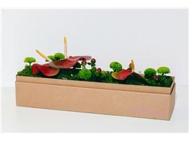 Exotischer Tischschmeichler - In unserem Garten Onlineshop