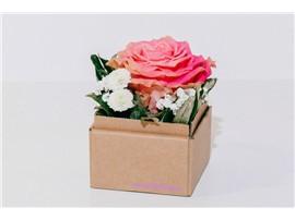 """Baumschule Kochauf in Lieboch bei Graz - Blumenbox Lieboch """"Englische Rose"""" kaufen"""